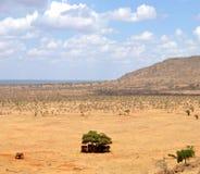 Groep die olifanten in de schaduw wacht Stock Afbeelding