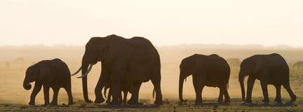 Groep die olifanten op de savanne lopen afrika kenia tanzania serengeti Maasai Mara Stock Fotografie