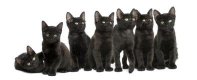 Groep die Zwarte katjes, 2 geïsoleerde maanden oud, samen zitten Royalty-vrije Stock Foto's