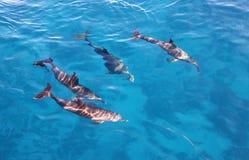 Groep dolfijnen in het overzees Stock Foto
