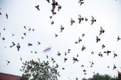 Groep duif Royalty-vrije Stock Fotografie