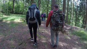 Groep ecologistmensen die op een trekking van de bergsleep lopen en van groen boslandschap genieten - stock videobeelden