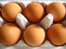 Groep eieren in beschermend geval Royalty-vrije Stock Afbeelding