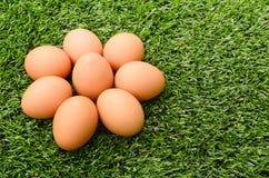 Groep Eieren op het gras Stock Fotografie