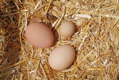 Groep eieren op stro in een nestelen-doos Stock Afbeeldingen