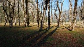 Groep esdoornbomen in een vallei stock foto's