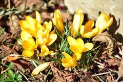Groep gele bloemen in het zonlicht stock fotografie