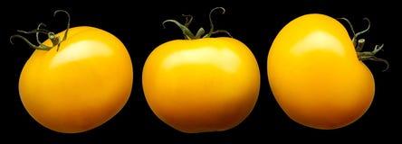 Groep gele die tomaten op zwarte achtergrond wordt geïsoleerd Stock Foto's