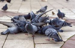 Groep grijze duiven in een stadspark stock foto