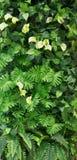 Groep groene bladachtergrond royalty-vrije stock afbeeldingen