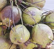 Groep groene jonge tedere Kokosnoten op de vloer Royalty-vrije Stock Foto