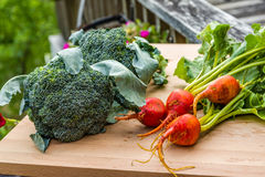 Groep groenten van de tuin Royalty-vrije Stock Fotografie
