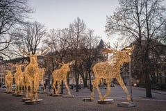 Groep grote die Amerikaanse elandenbeeldhouwwerken van geleide lichten wordt gemaakt in Nybrokajen tijdens Kerstmisseizoen Stock Foto