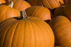Groep Halloween pompoenen Stock Afbeeldingen