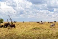 Groep herbivore dieren in savanne in Afrika royalty-vrije stock afbeelding