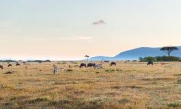 Groep herbivore dieren in savanne in Afrika stock afbeelding