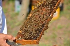 Groep het werk bijen op houten kader Royalty-vrije Stock Foto's