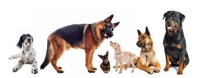 Groep honden royalty-vrije stock foto