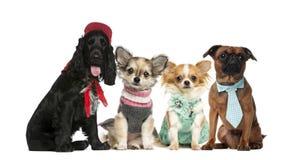 Groep honden het zitten Stock Afbeelding