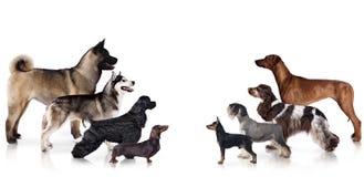 Groep honden in profiel stock afbeelding