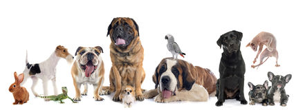 Groep huisdier stock fotografie