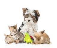 Groep huisdieren en vogels Geïsoleerdj op witte achtergrond Royalty-vrije Stock Foto's