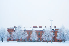 Groep ijzige bomen Royalty-vrije Stock Foto