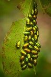 Groep insecten royalty-vrije stock fotografie