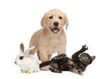 Groep jonge huisdieren royalty-vrije stock foto's