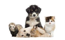 Groep jonge huisdieren royalty-vrije stock fotografie