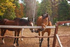 Groep jonge paarden op het weiland Royalty-vrije Stock Foto's