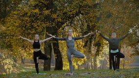 Groep Jonge vrouwen die de oefening van de Yogaactie gezond in het park doen Het concept van de gezondheidslevensstijl stock video