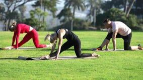 Groep jongeren die yoga op de kust in de loop van de dag uitoefenen Groen gras stock videobeelden