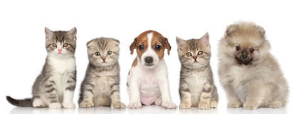 Groep katjes en puppy Royalty-vrije Stock Afbeelding