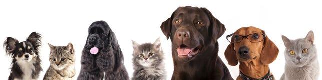 Groep katten en honden Stock Foto's