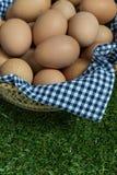 Groep kippeneieren in een mand Stock Foto