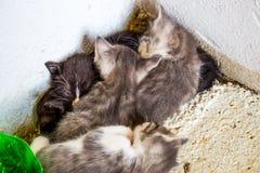 Groep kleine gestreepte katjes in een oude mand met ballen van garen stock afbeelding