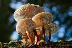 Groep kleine paddestoelen op een boomboomstam Stock Fotografie