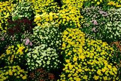 Groep kleurrijke bloemen met bladeren als achtergrond stock fotografie