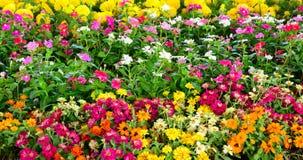 Groep kleurrijke bloemen met bladeren als achtergrond, stock foto