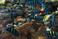 Groep kleurrijke vissen stock afbeelding