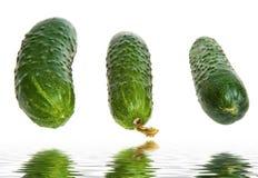 Groep komkommers Stock Afbeelding