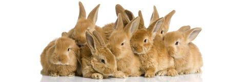 Groep konijntjes Stock Afbeelding
