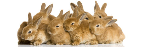 Groep konijntjes Stock Foto