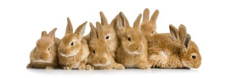 Groep konijntjes Stock Foto's