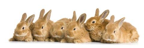 Groep konijntjes Royalty-vrije Stock Afbeelding