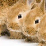 Groep konijntjes Royalty-vrije Stock Afbeeldingen