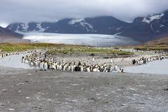 Groep Koning Penguins Along een Rivierbank stock foto's