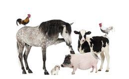 Groep landbouwbedrijfdieren stock afbeelding