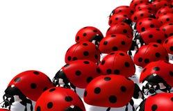 Groep lieveheersbeestjes Royalty-vrije Stock Foto